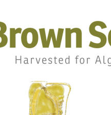 Brown Seaweeds Used in Making Alginate